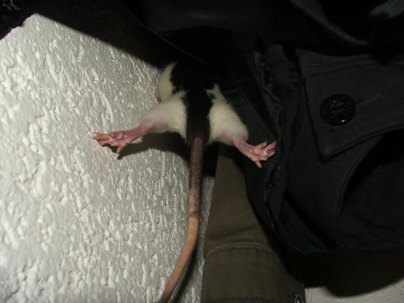 Rattenbesuch - Stunt(wo)man #1