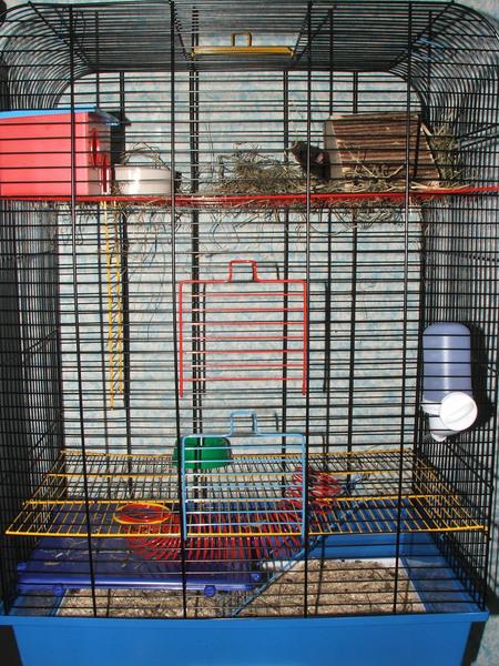 Broscha - Neues Zuhause (das wird noch mehr eingerichtet)