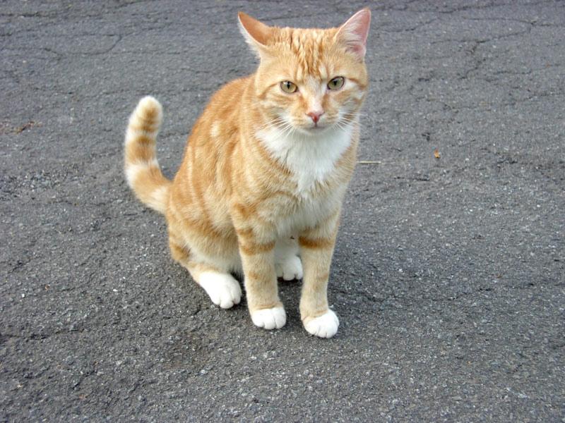 Tommy, der kleine Tiger
