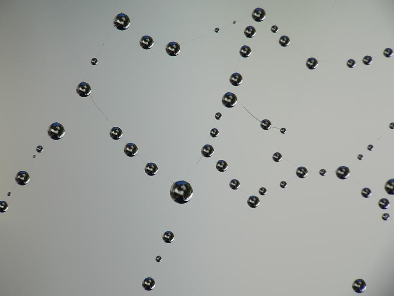 Wasserperlen auf Spinnennetz