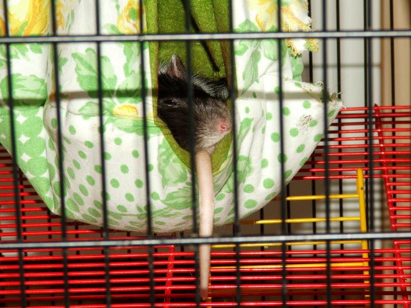 Broschas neue Art zu schlafen - auf dem eigenen Schwänzchen