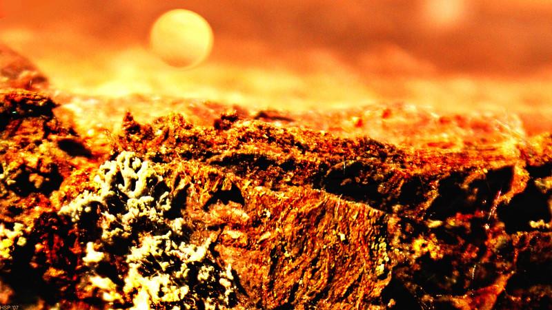 artos: MARS ODYSSEY  ( Detail von einer Baumrinde)