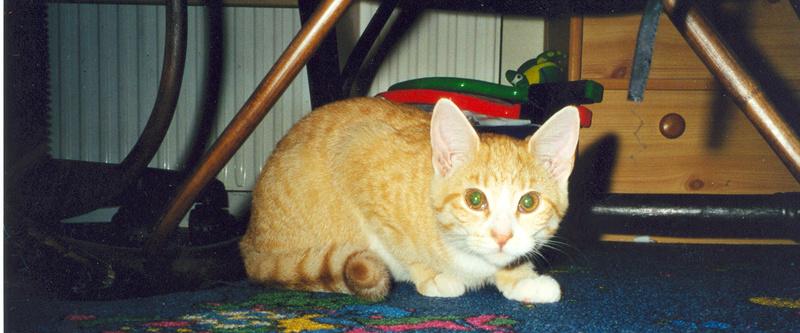 Kitty noch klein & brav =)