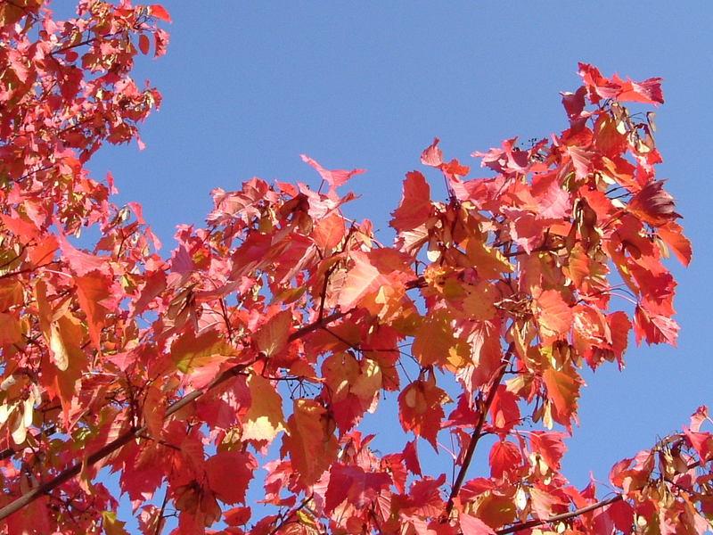Der Herbst naht ...