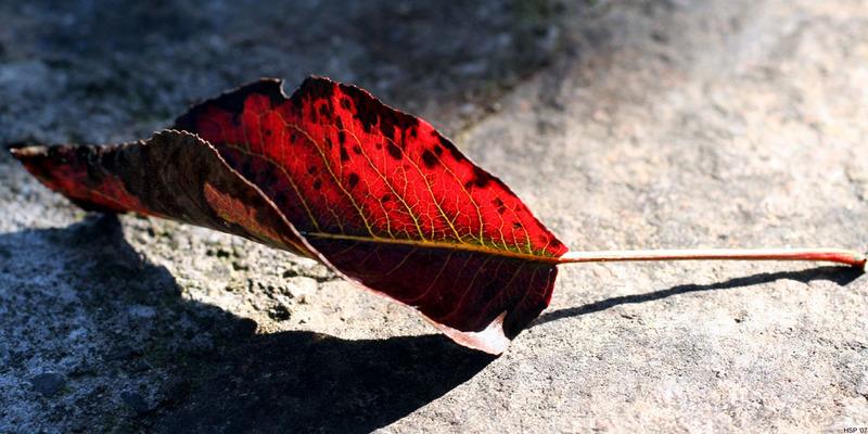 artos: Das Ende des Sommers