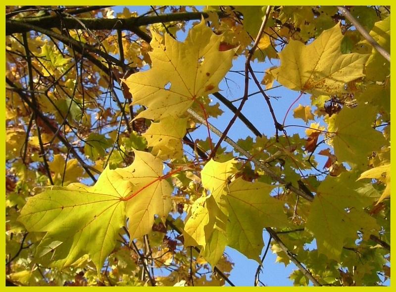 Wundervolle Herbstfarben..