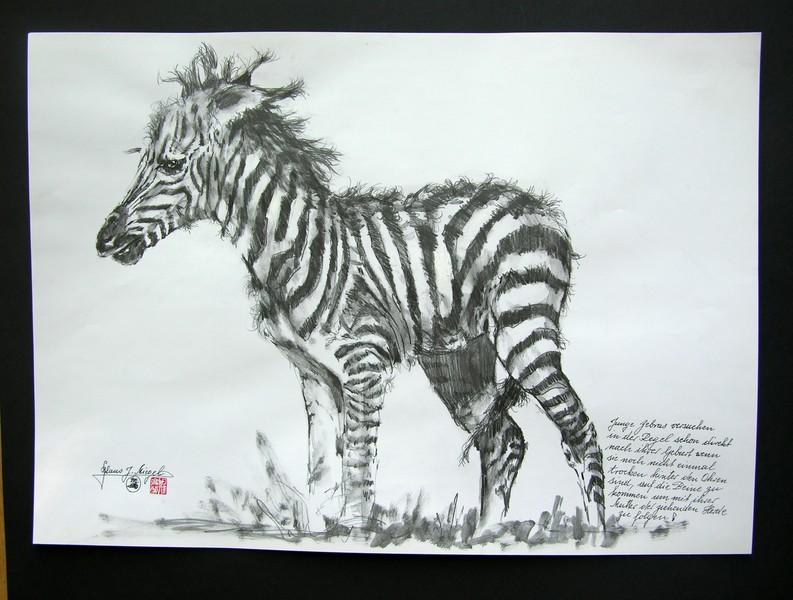 Portrait eines Neugeborenen (Zebras)