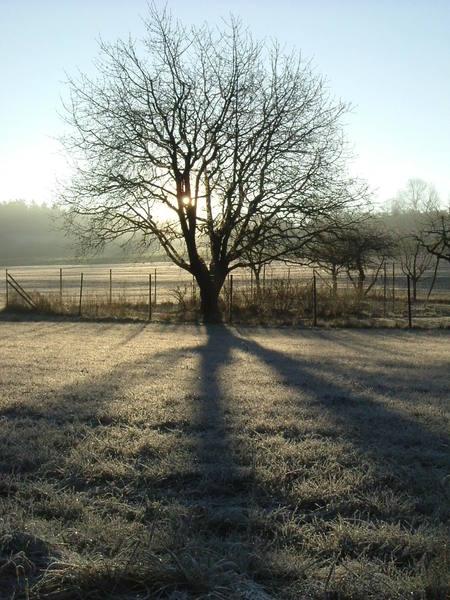 Eisige Morgenstimmung auf glitzerndem Boden ..