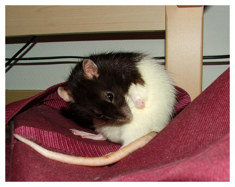 Broscha macht sich unter dem Bett sauber