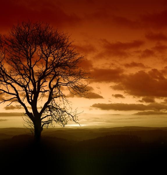 pidocu: Baum Tabaco: Mittelformat Kiev88 und Farbverlaufsfilter