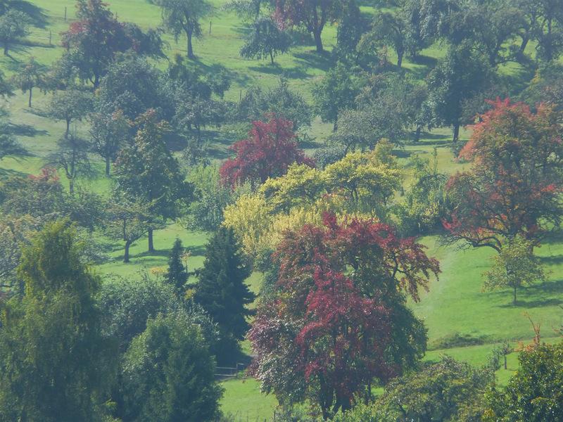 Ein diesiger Herbsttag ...