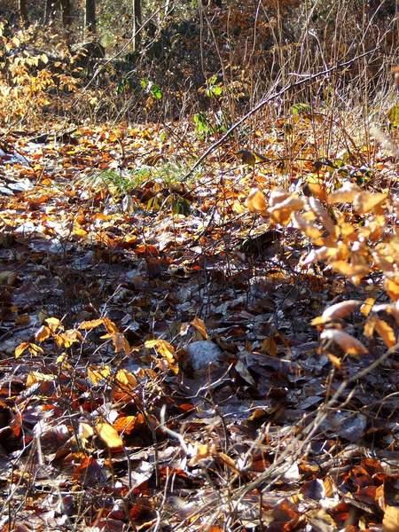 Broschas letzte Ruhestätte im Wald
