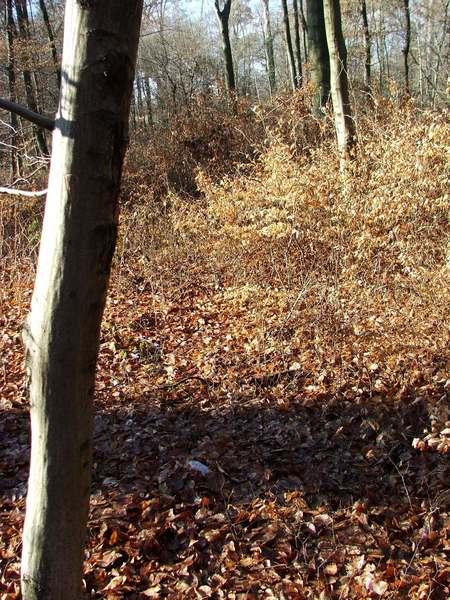 Broschas Ruhestätte bei ihrem Baum