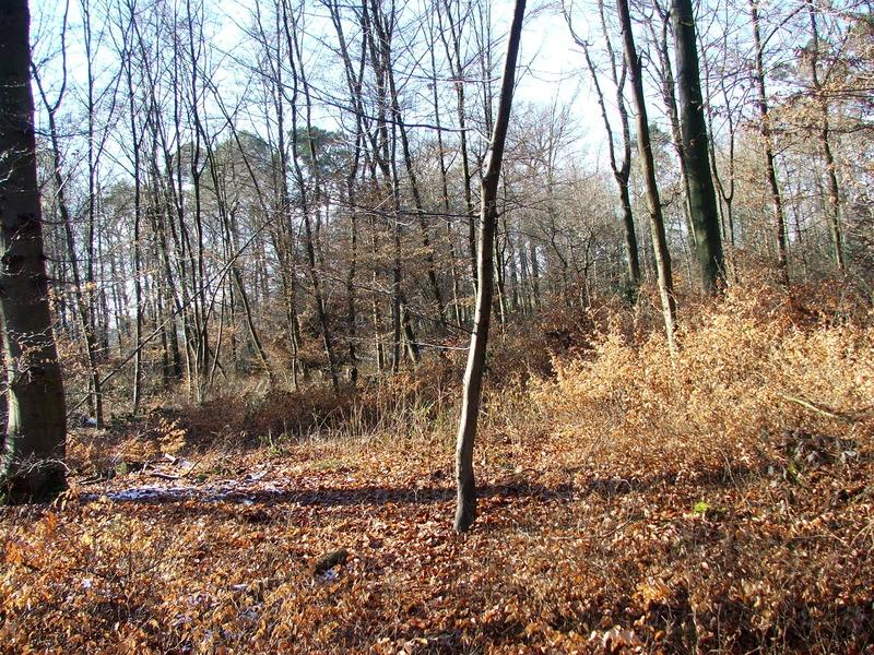 Broschas Baum