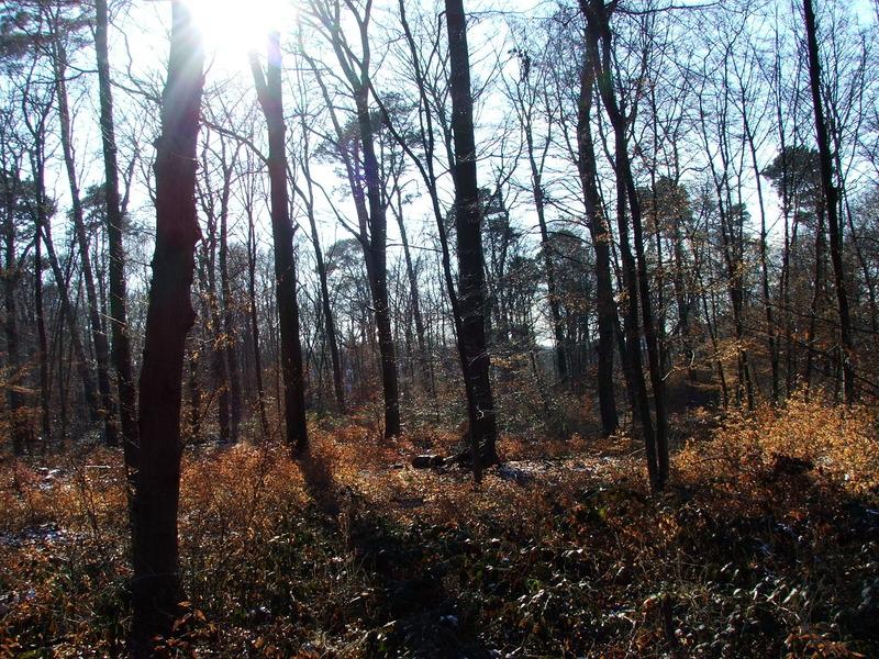 Der Wald in dem Broscha begraben ist