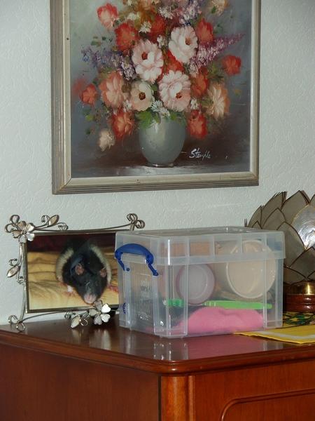 Die Box mit Broschas Sachen