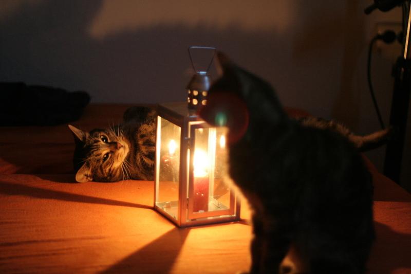 Katzenromantik Part2 (Poki & Canny v.l.n.r.)