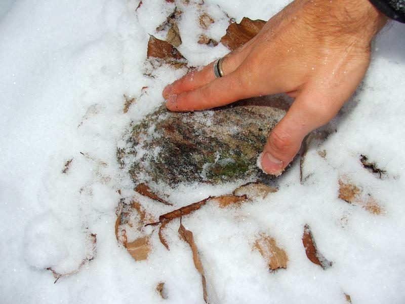 Broschas Steinchen im warmen Schneebettchen (Winter 2009) 1