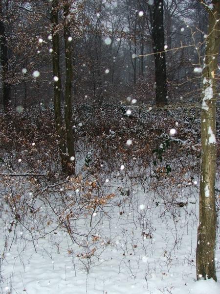 Leise fiel der Schnee an diesem schönen Ort (Winter 2009)