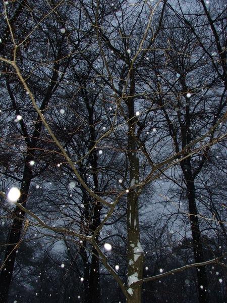 Schneefall in Broschas Wald