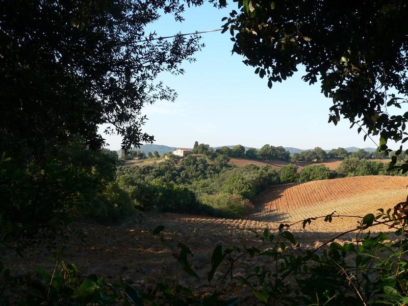 Landschaft, Toskana, Maremma