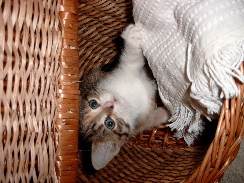 deepredsunset: Sally in ihrem Versteck