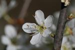 Frühling Impressionen 1