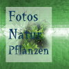Fotos Natur Pflanzen