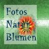 Fotos Natur Blumen