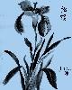 Sumi-e (Japanische Tuschzeichnungen)