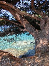 Küste Neos Marmaras - Griechenland 2005