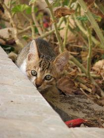 Kätzchen am Verstecken