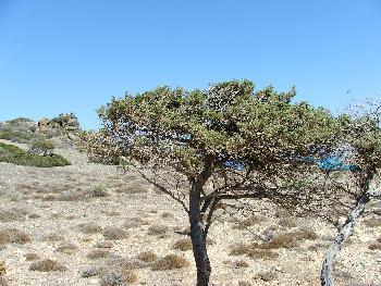 Wüstenmotiv (I.Chrissi)