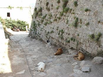 Hunde beim Ausruhen an der Mauer der venezianischen Festung in Rethymon