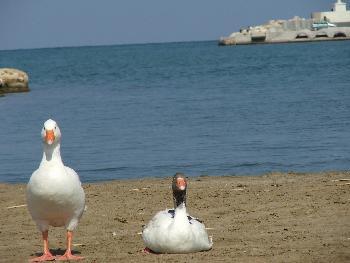 Badegäste am Strand von Rethymon am Posieren