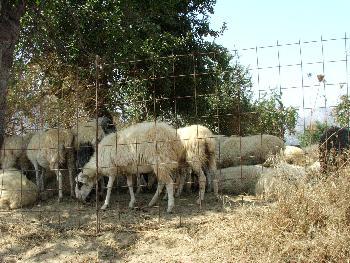 Andere Bewohner des Lasithia-Plateau (Drive-By Aufnahme)
