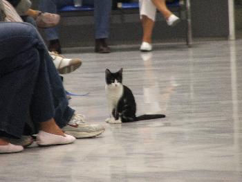 owlet: Kätzchen am Flughafen