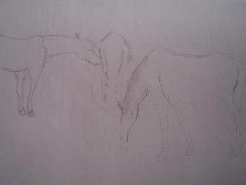 Pferde..Skizze