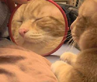 Der Digge vor dem Spiegel