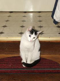 Zugelaufene Katze 2 - nachdenklich
