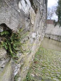 Mauernahaufnahme
