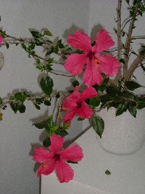 Drei Blüten ...
