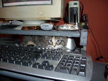 Guten Tag ich bin der Mousefänger*fg