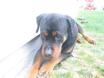 Hopeless: Der Hundeblick - ist DER nicht süüüüüüüüüüüß ???????