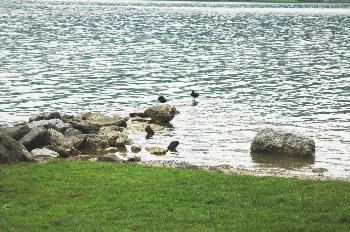 Alpsee 25 (4x H5N1 am Ufer)
