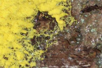Naturfraktal - Pilzbefall auf Baumrinde