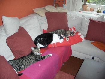 Wir sind die Sofabesetzer