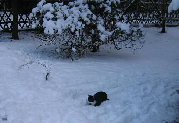 Der erste Winter meiner Katze