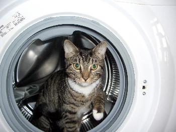 Ich gugge mal nach der Wäsche