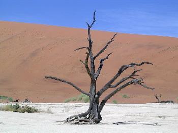 Insulanerin: Dead Vlei in der Namib Desert